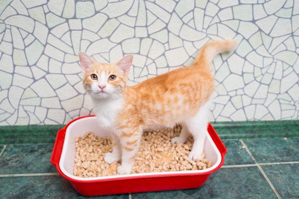 Cat Diarrhea — When Is It a Concern? - Catster