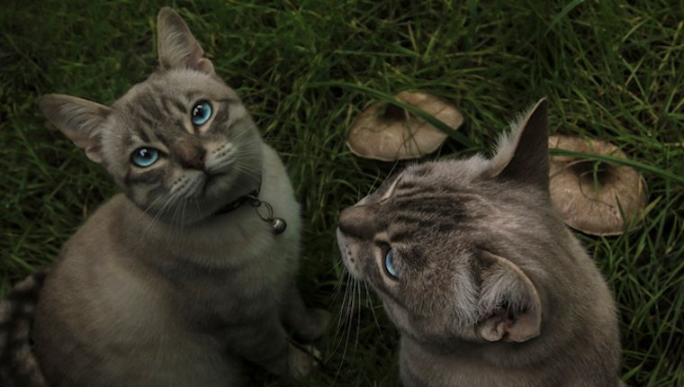 Can Cats Eat Mushrooms? Are Mushrooms Safe For Cats? - CatTime