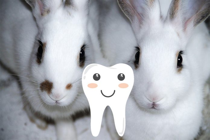 Do Rabbits Have Nerves in Their Teeth   Petsial