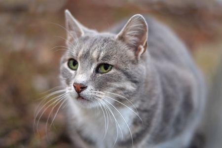 Why Do Female Cats Spray?