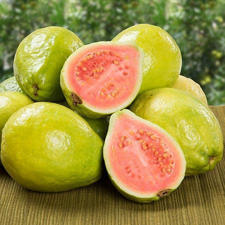 Ruby Supreme Guava Trees for Sale– FastGrowingTrees.com