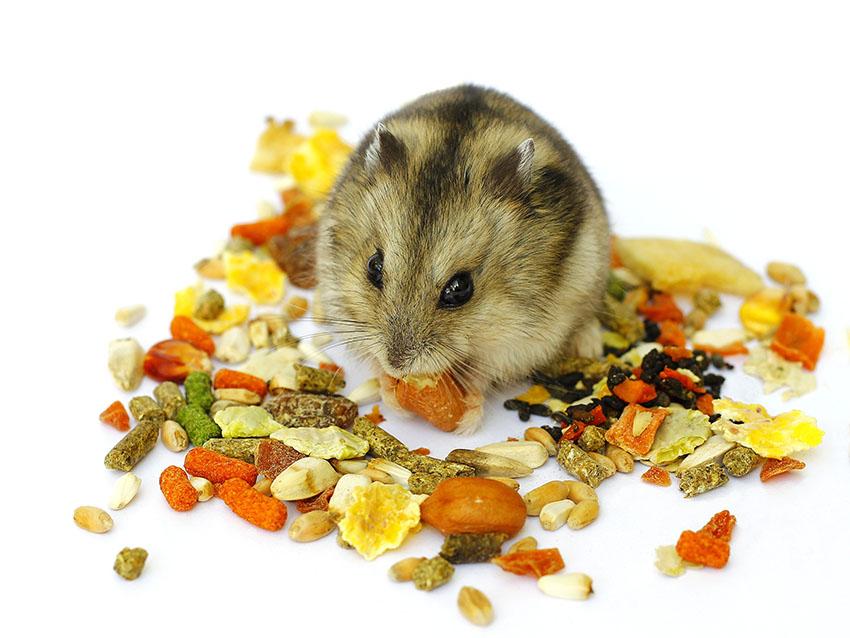 What Do Hamsters Eat? | Feeding Your Hamster | Hamsters | Guide | Omlet UK