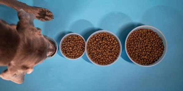 How Much and How Often Should You Feed Your Dog?