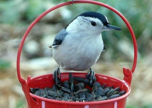 Attracting Birds | Feeding Birds | Best Birdseed