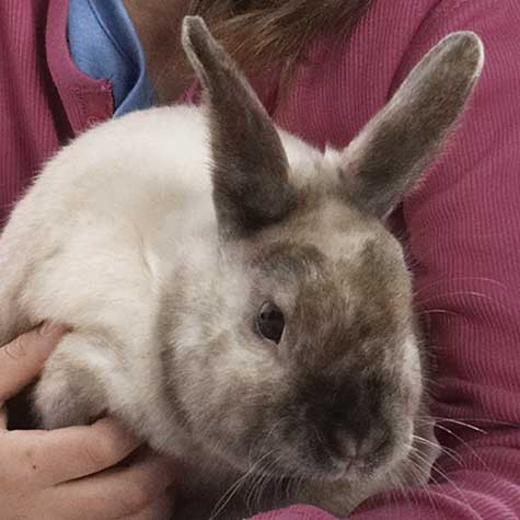 Stress & Digestive Inflammation in Rabbits | Purina Animal Nutrition