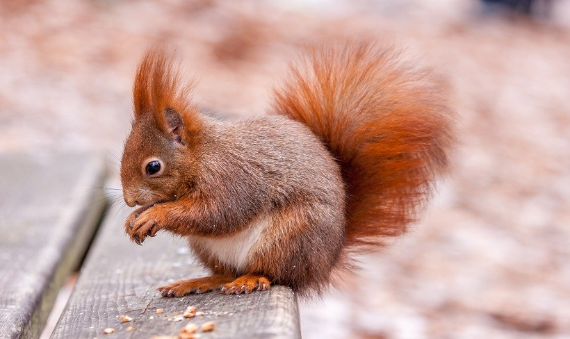What Do Squirrels Eat In Jungle On The Trees And On The Grass?