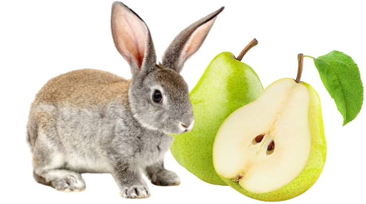 Can Rabbits Eat Pears? (Serving Size, Benefits, Risks)
