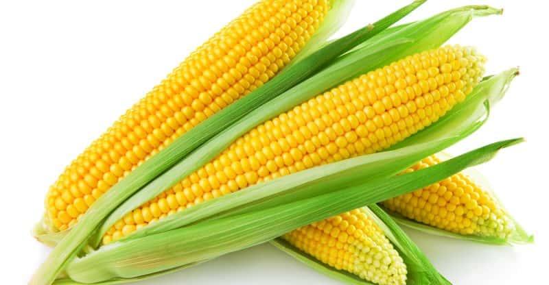 Can rabbits eat corn? (Serving size, Hazards, Benefits)