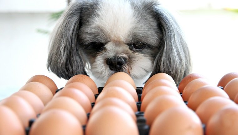 Can Dogs Eat Eggs? Are Eggs Safe For Dogs? - DogTime