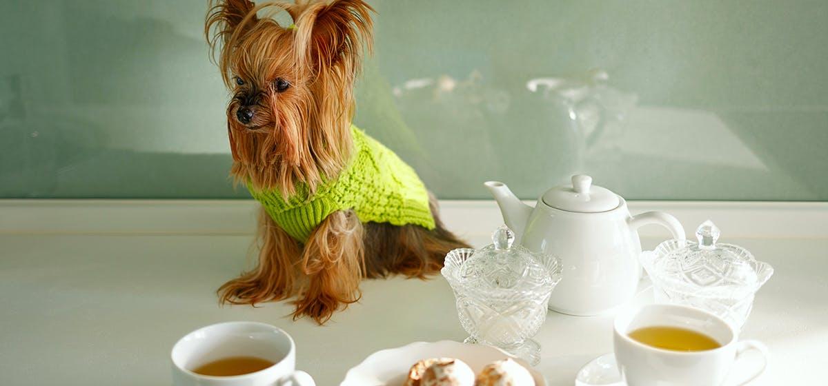 Can Dogs Taste Black Tea? - Wag!