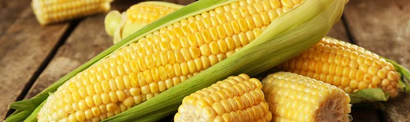 Can Rabbits Eat Corn on the Cob? - Furry Facts