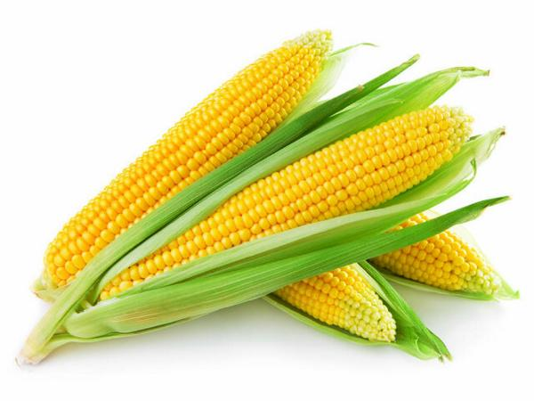Can rabbits eat corn?   Rabbits.life