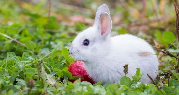 Can Rabbits Eat Radishes?   Radish Greens Feeding Guide