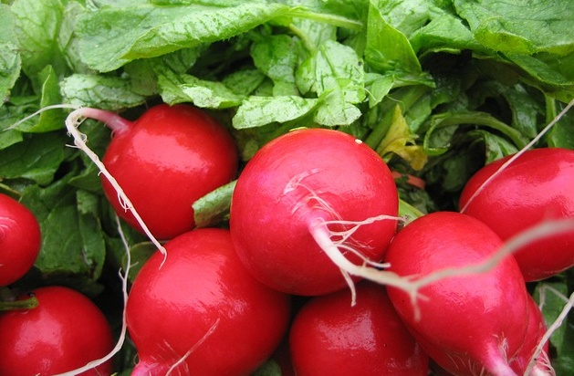 Can Rabbits Eat Radishes And Their Leaves?