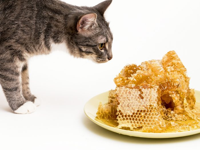Can Cats Eat Honey   Organic Facts
