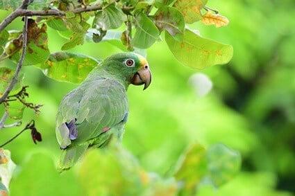 Are Cashews Good For Parrots? — All About Parrots
