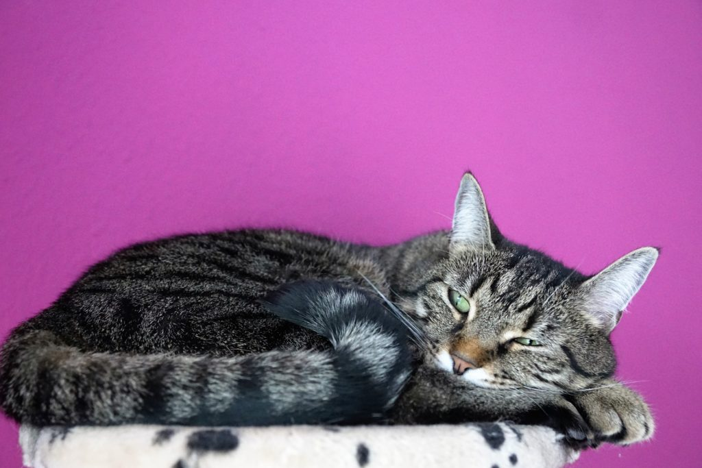Cat Hyperthyroidism, Diabetes, Diarrhea, and other Common Health Problems in Cats - The Kitty Expert