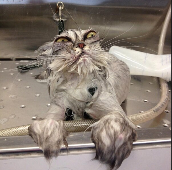 Cat Baths: 6 Things You Should NOT Do - Catster