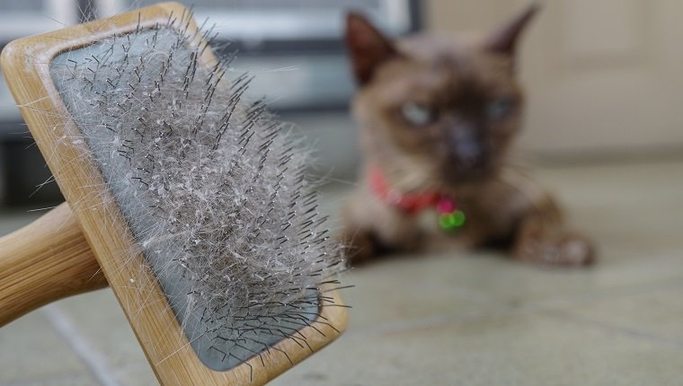 Cat Dandruff: What You Need To Know - CatTime
