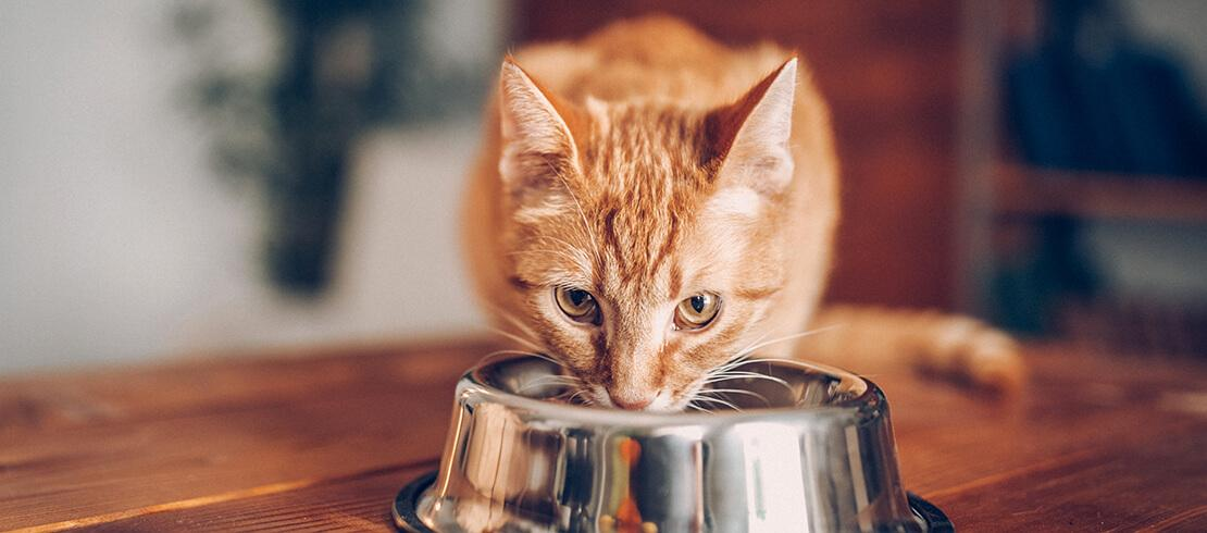 7 Foods Your Cat Can't Eat