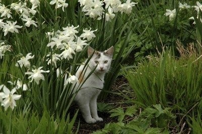 How To Repel Cats - Keeping Cats Out Of Garden Areas