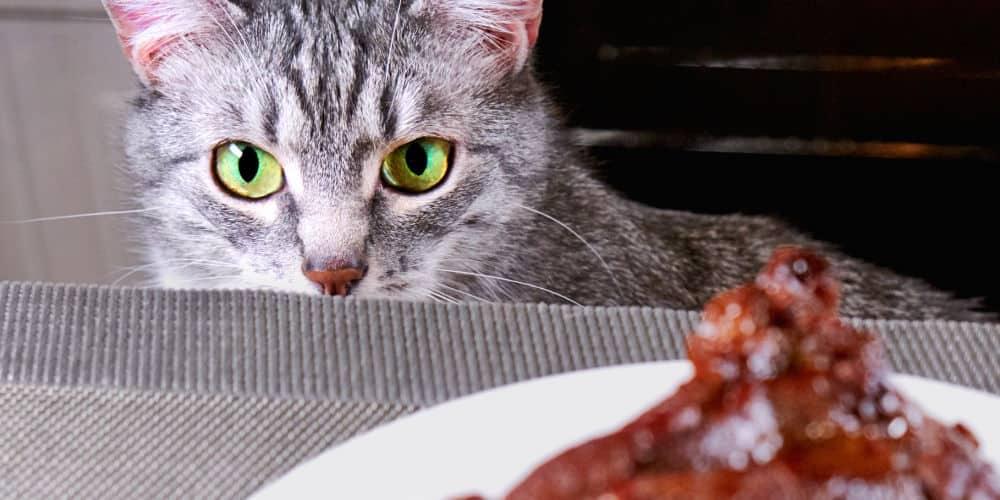 Can Cats Eat Pork? - Cat Attitudes