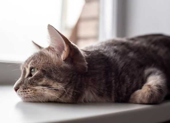 Cat Diarrhea: Causes and Treatment | PetMD