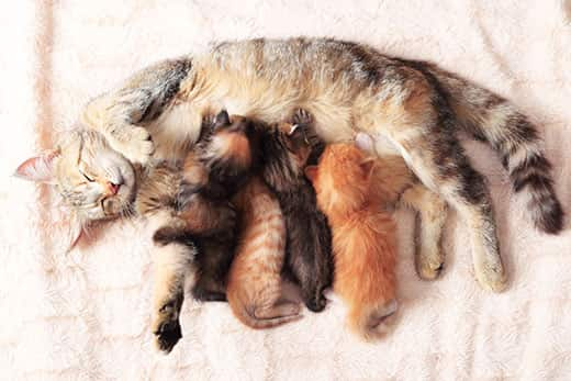 Is My Cat Pregnant? How to Tell & Tips for Care | Hill's Pet