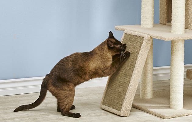 How to Get a Cat to Stop Scratching | Petco