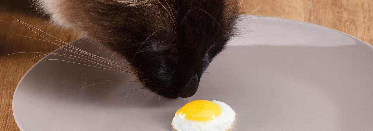 Can Cats Eat Eggs? | Hill's Pet
