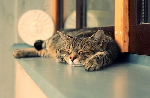 7 Reasons Cats Sleep More During the Day Than at Night - My Animals