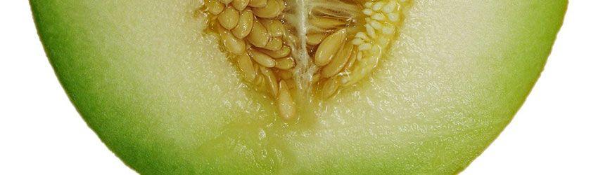 Can Rabbits Eat Honeydew Melon?   Rabbit eating, Honeydew melon, Honeydew