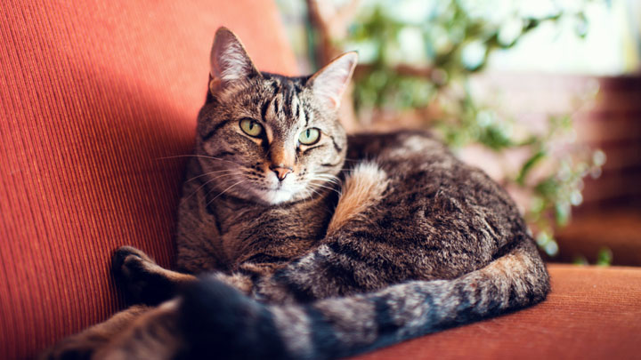 Know More about Diarrhea in Cats, Symptoms and Causes