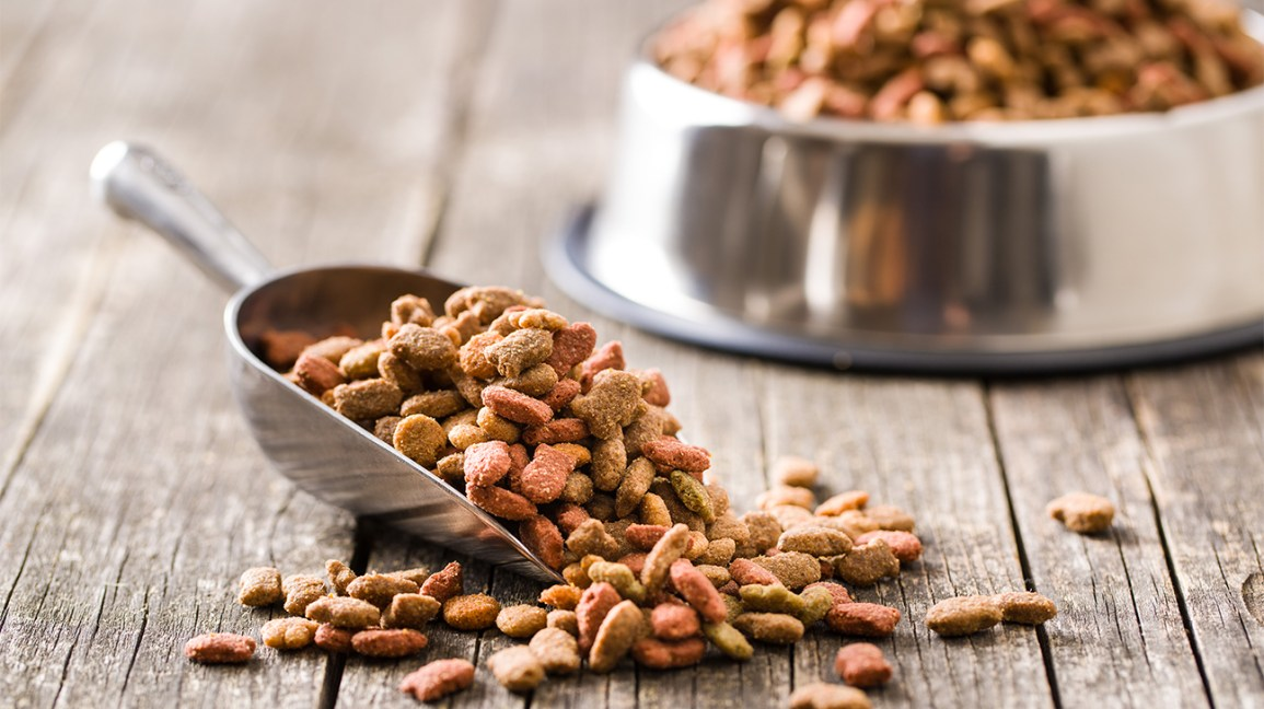 Can Humans Eat Dog Food?