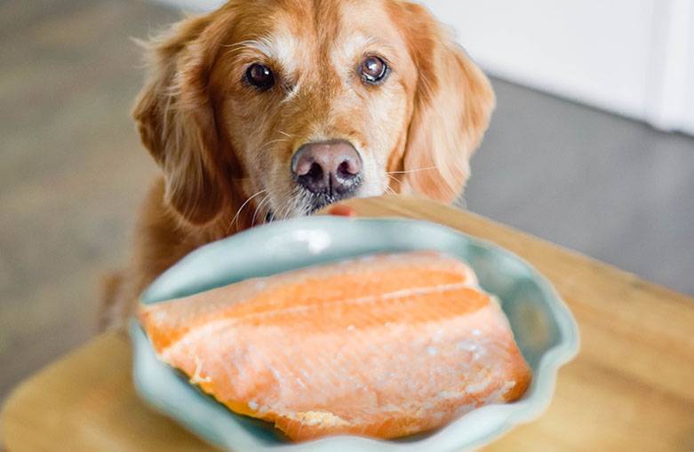 Is Salmon Good for Dogs? - AvoDerm