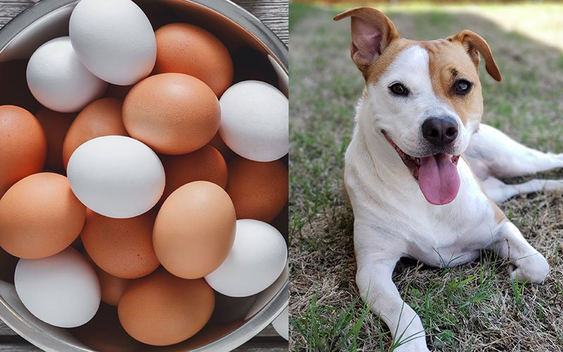 Can Dogs Eat Eggs? Super Foods for Dogs   The Bark