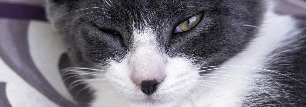 Can Cats Get Conjunctivitis or Pink Eye? | Hill's Pet