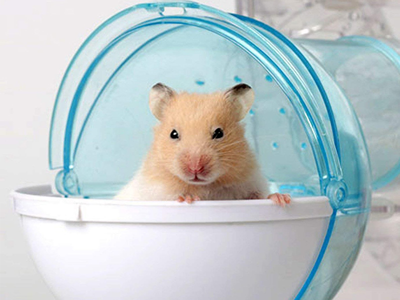 Can Hamsters Have Sand Baths