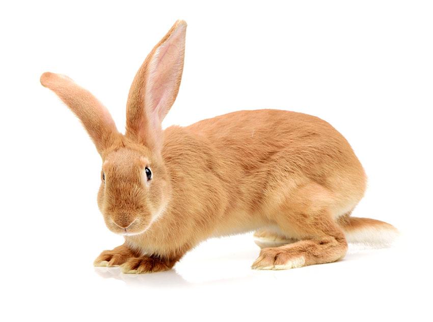 How Often To Clean A Rabbit | Rabbit Hygiene | Rabbits | Guide | Omlet UK