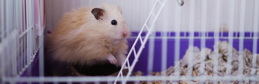 How to Potty Train Your Hamster | My Pet Needs That