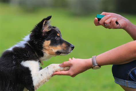 Best Way To Train A Dog - Animals Home Training A Dog