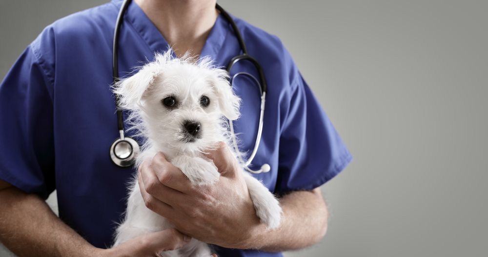 How Often Do Pets Need to Visit the Vet? | Kato Animal Hospital