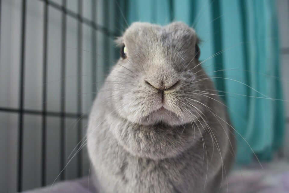 Can Rabbits Eat Mango? See Warnings, Serving Limits And More