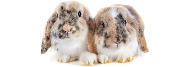 Flystrike in Rabbits - Prevention and Husbandry   Vet4Life