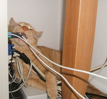 Why does my cat chew wires? - Quora
