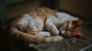 Why Is My Cat Being Sick? How To Treat Cat Vomiting | Vets Now
