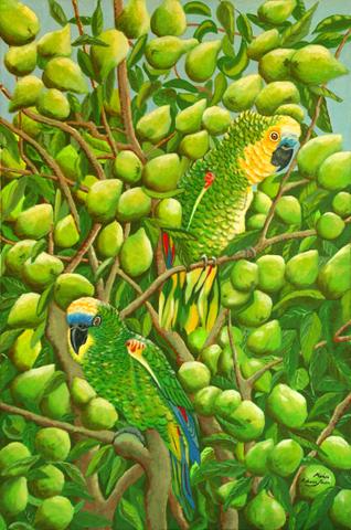 Amazon blue front parrots in guava tree – Marisa Mann