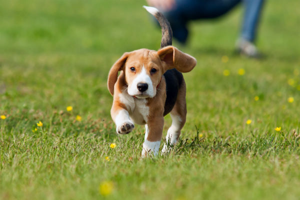 How to Train a Dog to Come: Dog Training Tips
