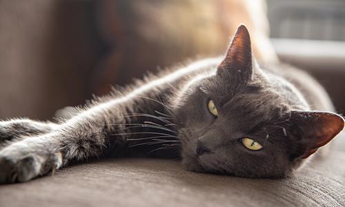 Why Do Cats Spray? | Purina® Canada