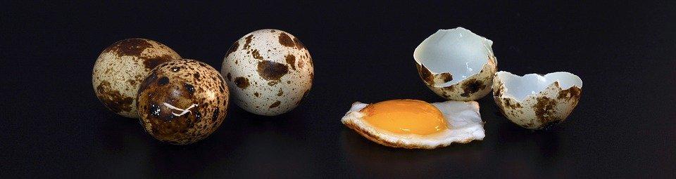 Quail Egg Shell Fried - Free photo on Pixabay